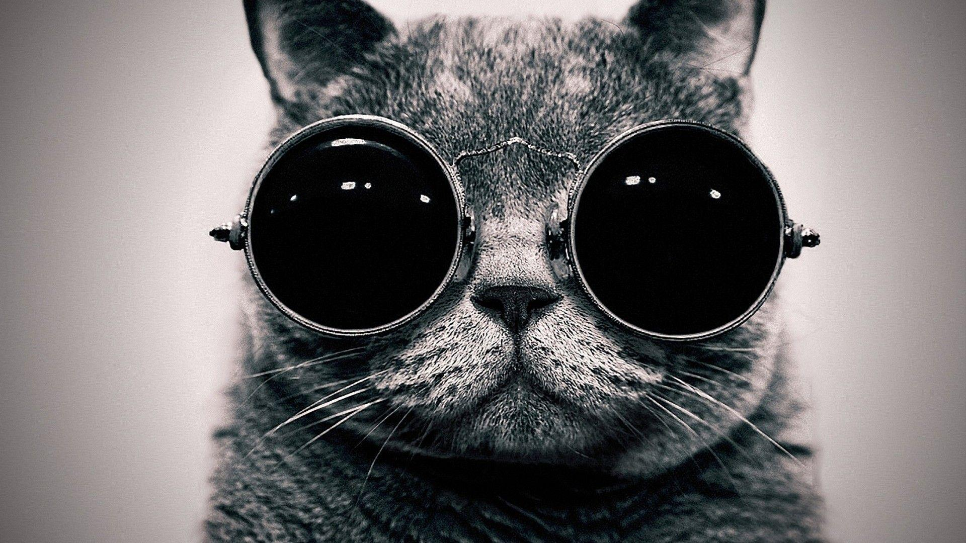 Funny Black Cat Pictures Background Hd Wallpaper 1920x1080 Linus Tech Tips