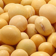 SoybeanSong